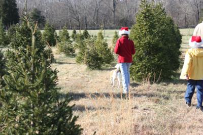 Search for Christmas Tree